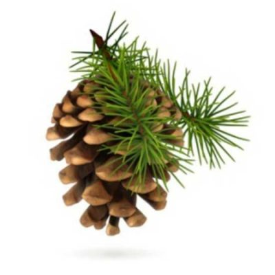 Fresh Pine Fragrance Oil