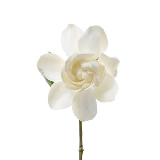 Vintage Gardenia Fragrance Oil