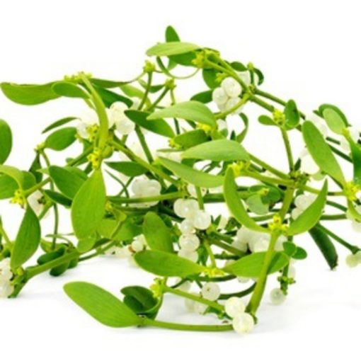 White Mistletoe