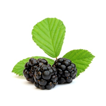 Blackberry & Bay Fragrance Oil