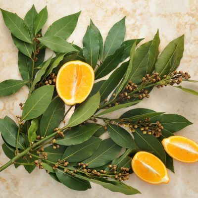 Bay Laurel Fragrance Oil