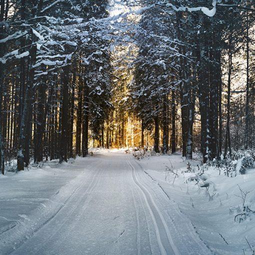 Evening Snow Fragrance Oil